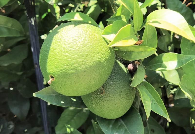 Productos quimicos no autorizados para recubrimiento de frutas a la importacion